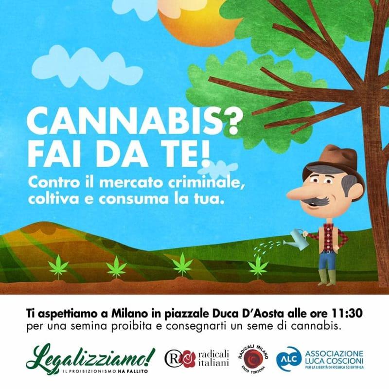 20 aprile – Giornata 420 o della Marijuana