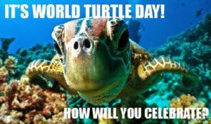 16 giugno – Giornata Tartarughe Marine – Bloomsday