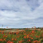 Il cuore verde, arancione, giallo, fucsia dell'Irlanda – 7 agosto