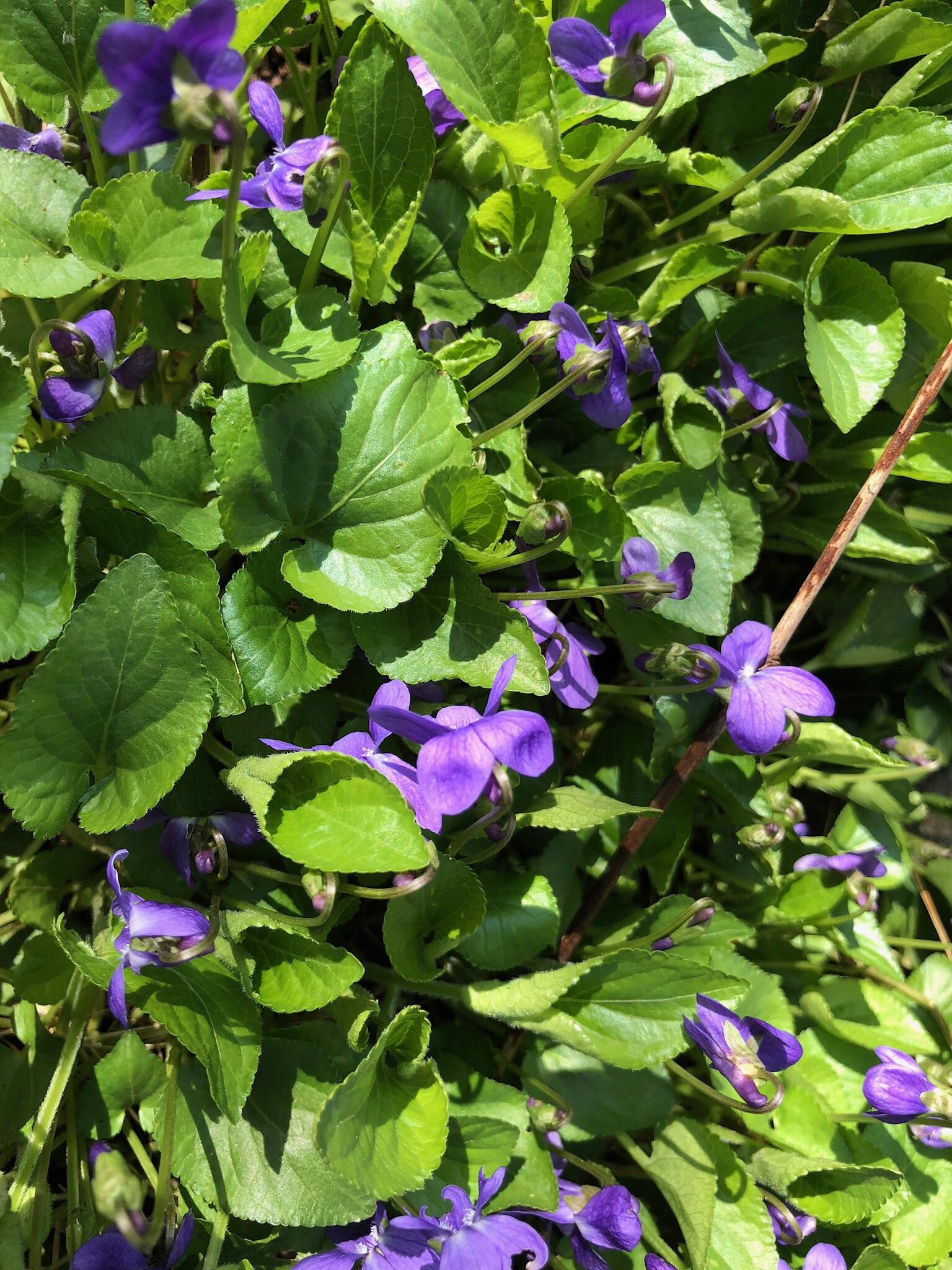 Primavera ed altro il 21 marzo